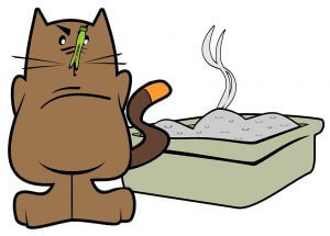 How To Litter Train A Cat
