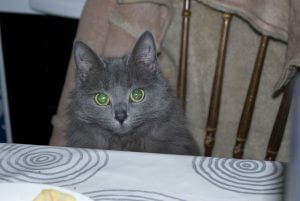 RSPCA Cat Fluffy