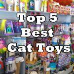 Top 5 Best Cat Toys