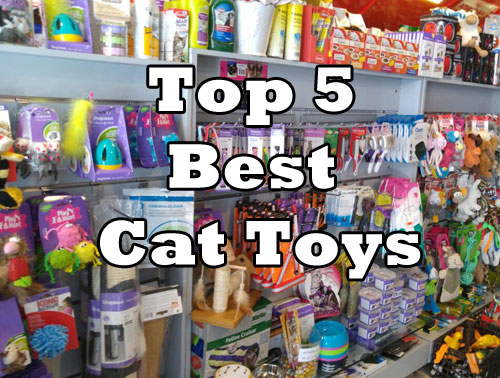 Top 5 Best Cat Toys