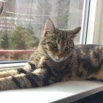 Different Types Cat Personalities - Angel (Skittish)