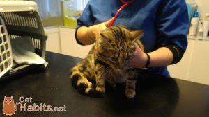 Angel at the veterinary