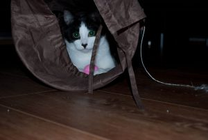 Nusse in her Tunnel with a soft ball
