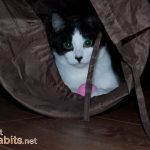 Why Do Cats Like To Hide?