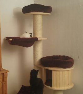 How To Clean A Cat Tree
