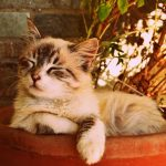 8 Things To Never Do To Your Cat