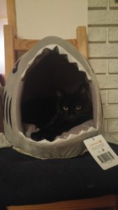 Kira In Our Cat Shark Bed