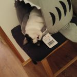 Nusse In Our Cat Shark Bed