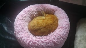 Tiger Asleep In Warm Catbed