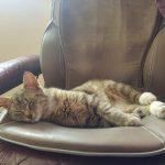 Tiny Asleep On Massage Chair