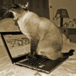 Why Do Cats Like Laptops?