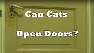 Can Cats Open Doors?
