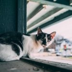 4 Great Outdoor Heated Cat Shelters