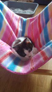 Kitten Nusse - Baby Hammock